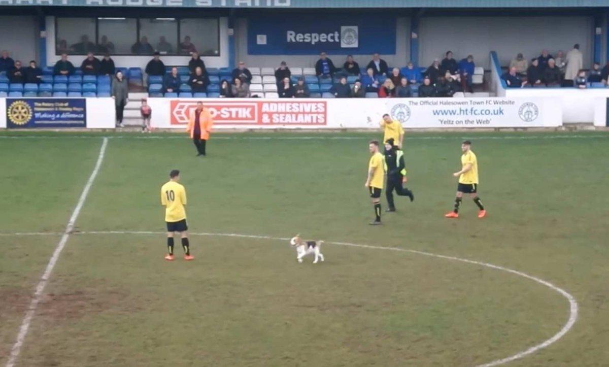 Пёс на поле -- забудь о футболе!